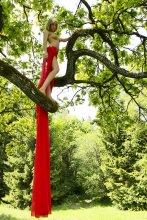Дикая птичка / дикая очень редкая в белорусских лесах птичка