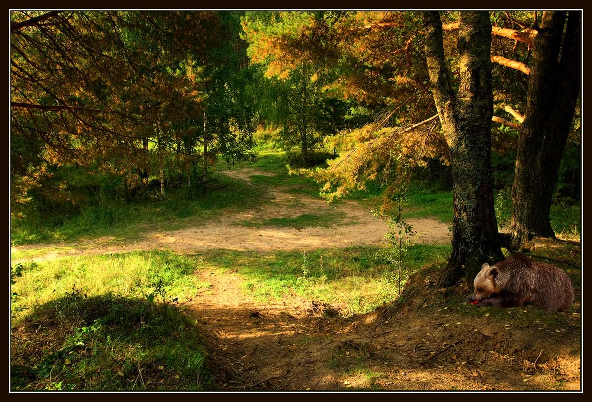 Сказочный лес. / Тверские леса.: photoclub.by/work.php?id_photo=142684