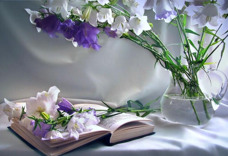 Цветок в книге  № 1489073 загрузить