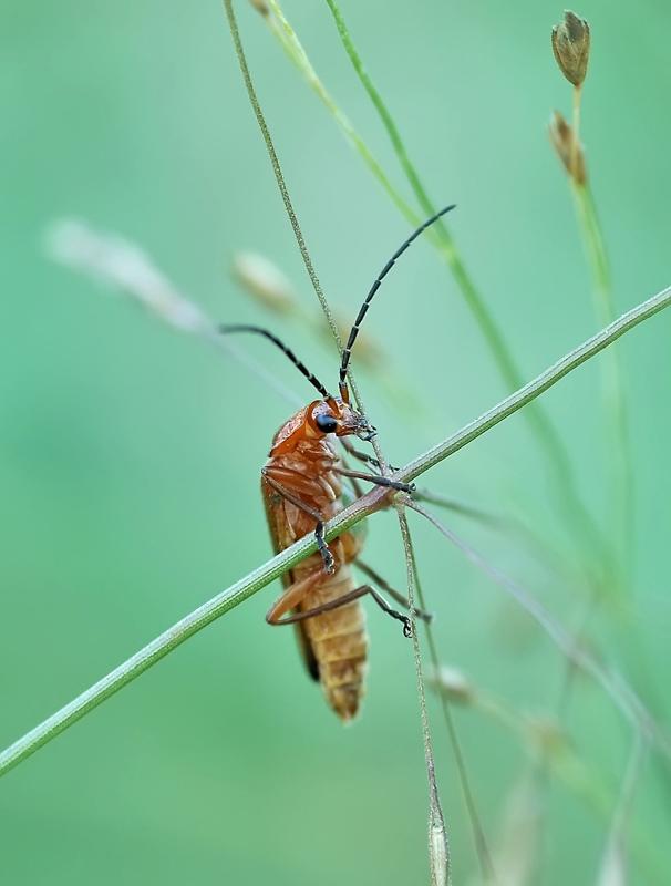 кусачая муха фото