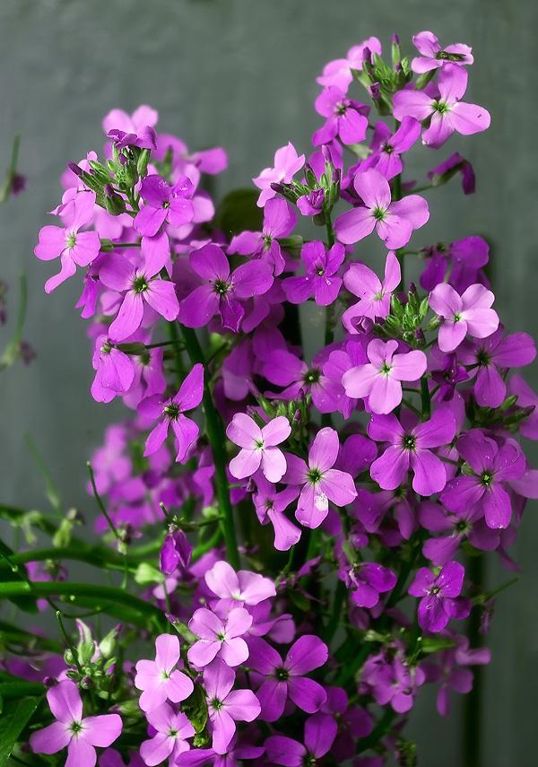 Веселая семейка комнатные цветы
