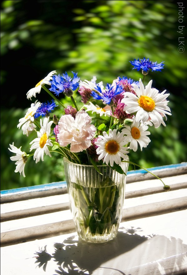 Букет цветов Букет из ромашек (камилла)