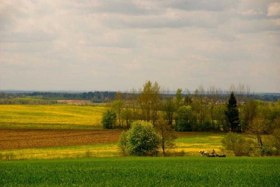 Сельские пейзажи