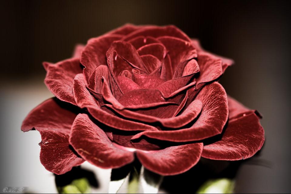 Как из бархата сделать розу