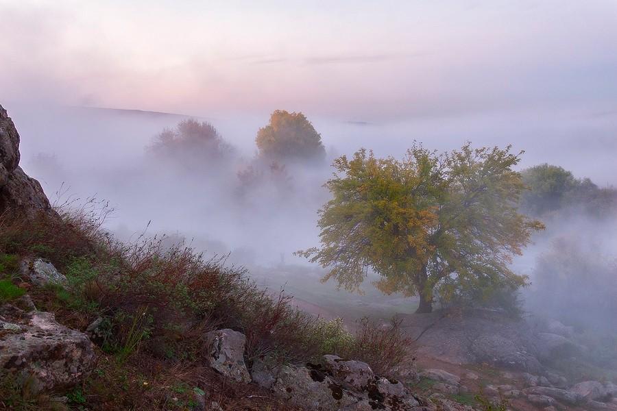Туман, туман