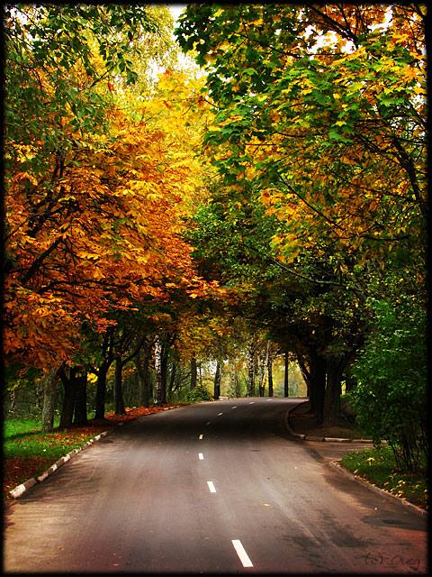 Славная осень... / Спокойно и пусто,чисто и холодно на перекрестках... (с) Юта