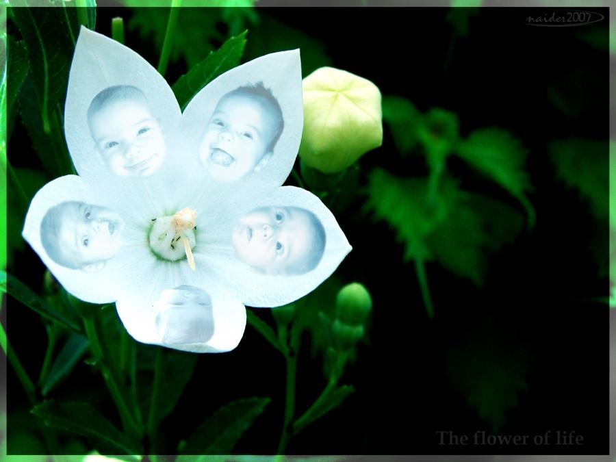 Смотреть красивые цветы картинки 6
