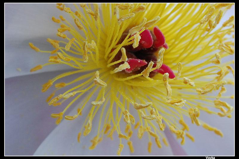 цветок / пестик и тычинки.