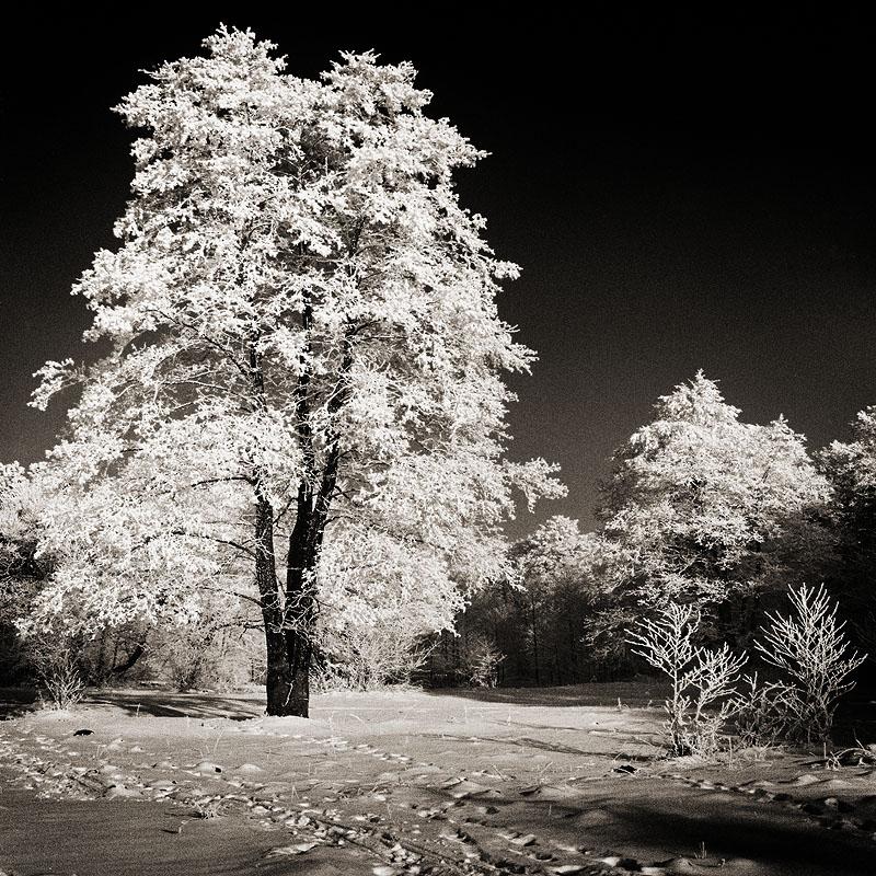"""Схема вышивки  """"Зимний пейзаж """" ."""