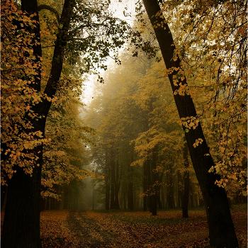 Немного про осень