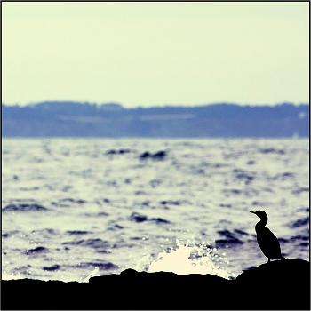 Про одинокую птицу