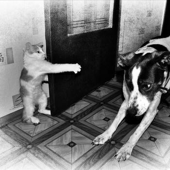 Лапы вверх,собака!